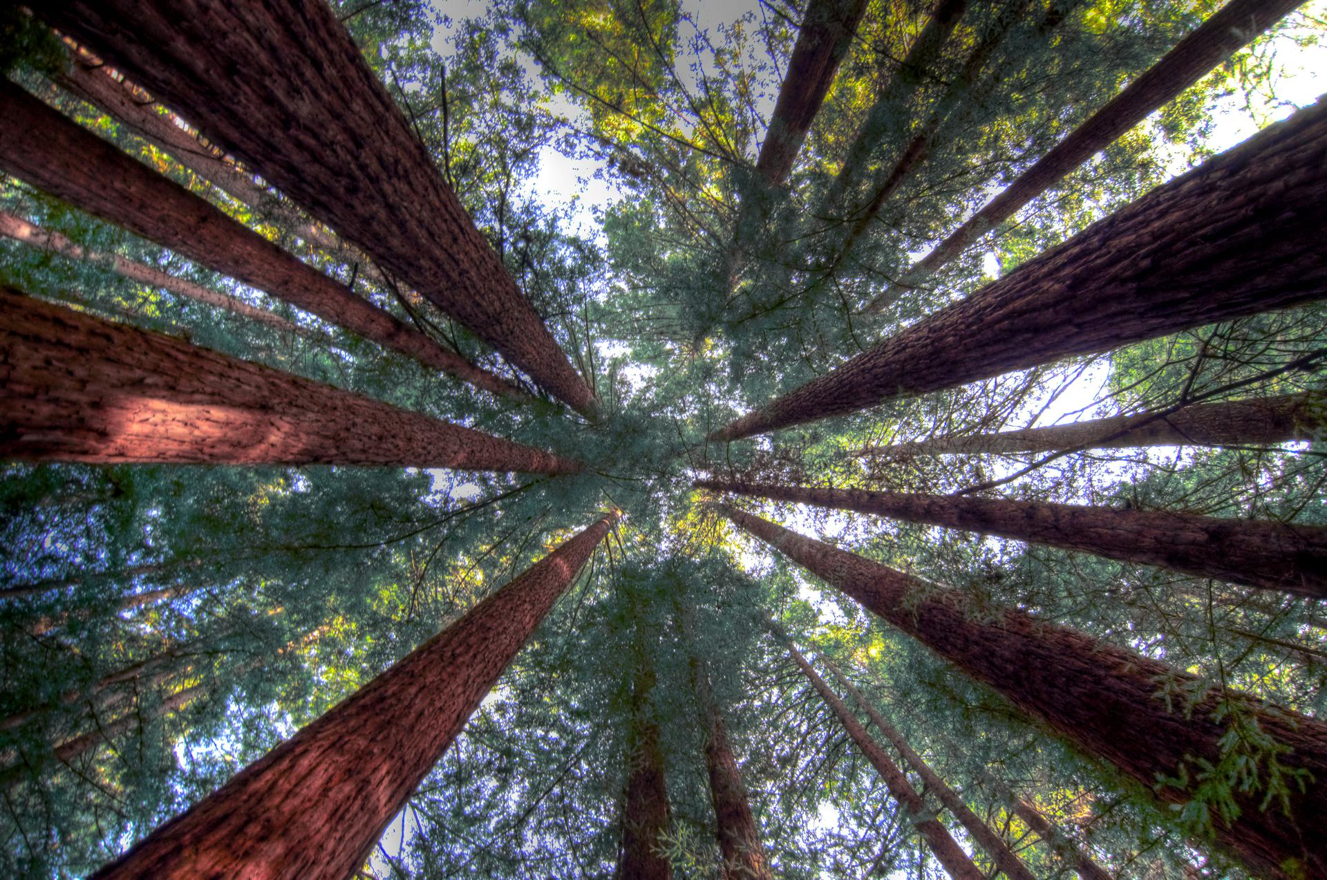 Scrubhiker (USCdyer) Humboldt Redwood Forest Single_tonemapped web